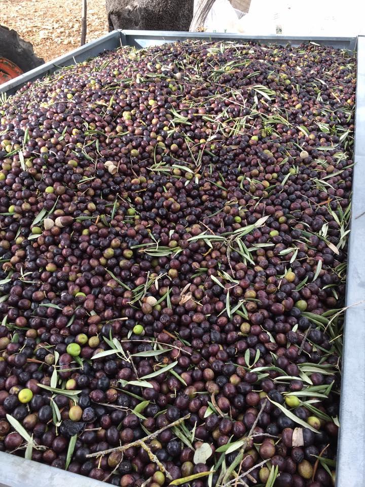 olives_luxury_villa_rental_ronda