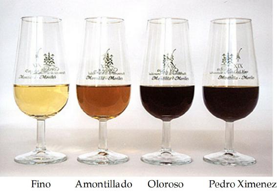 Fino-Amontillado-Oloroso-and-Pedro-Ximenez.png