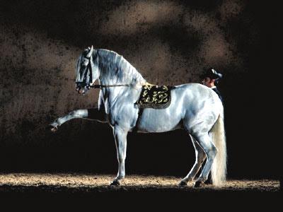 jerez_horses.jpeg