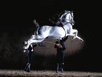 jerez_horses.jpg