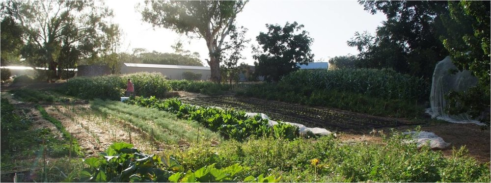 Photo courtesy of The Food Forest