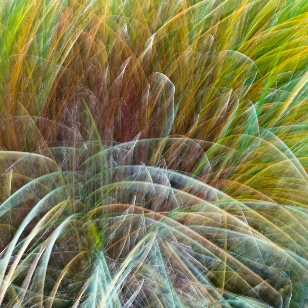 Gras, Zürich, Personal Work, Fotostory, Naturfotografie, Fotograf Zürich, Schweiz