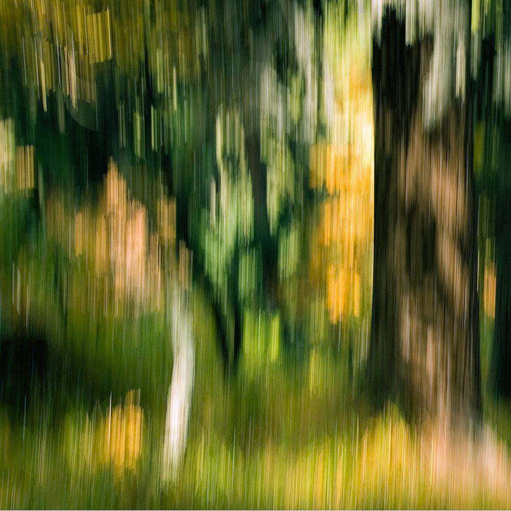 Wald, Zürich, Personal Work, Fotostory, Naturfotografie, Fotograf Zürich, Schweiz