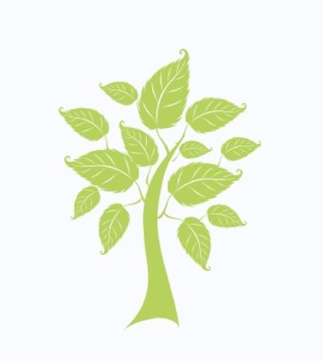 arbre 3.jpg