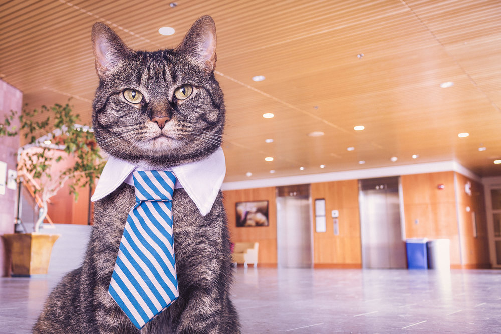 image of this judgmental cat from http://www.gratisography.com/
