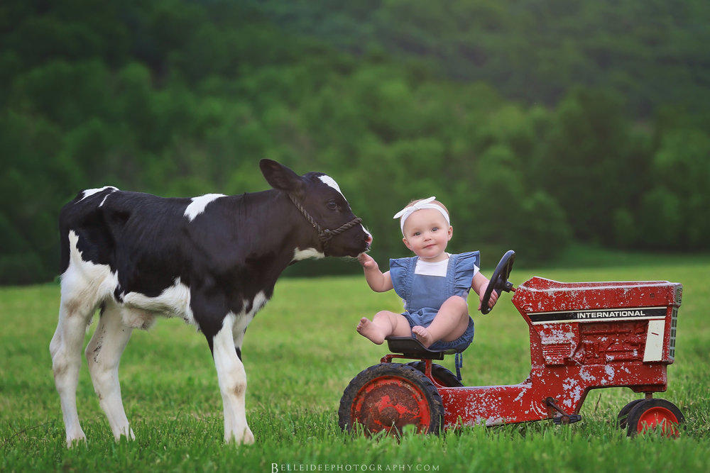 baby and cow photo session in WNY