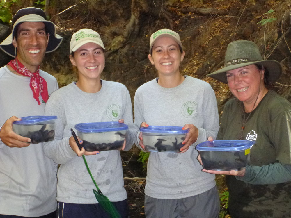The frog crew in action with a bunch of tadpoles to release to other pools in the stream. Jordyn (an intern for the project) and I traveled to Central America together after this project. My bosses Katy and Mark were so incredible!