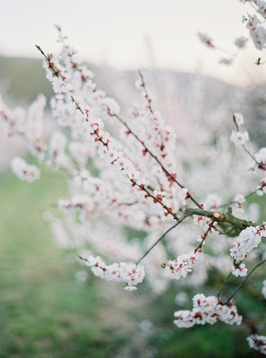 Apricot_Blossoms_Family_Shoot_0001.jpg