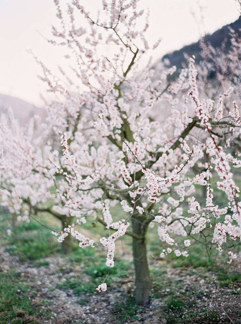 Apricot_Blossoms_Family_Shoot_0031.jpg