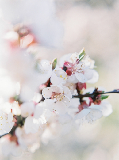 Apricot_Blossoms_Family_Shoot_0024.jpg