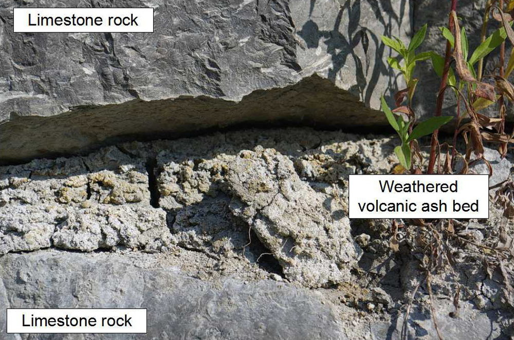 Figure 2: Close-up view of the grey-coloured, weathered, volcanic ash bed in the limestone rock. Note the soft nature of the volcanic ash bed, which weathers recessively into the enclosing, hard, limestone rock of the Bobcaygeon Formation. A plant has set roots in the bed of the soft weathered volcanic ash bed. Photo by Andy Fyon, July 7, 2016.