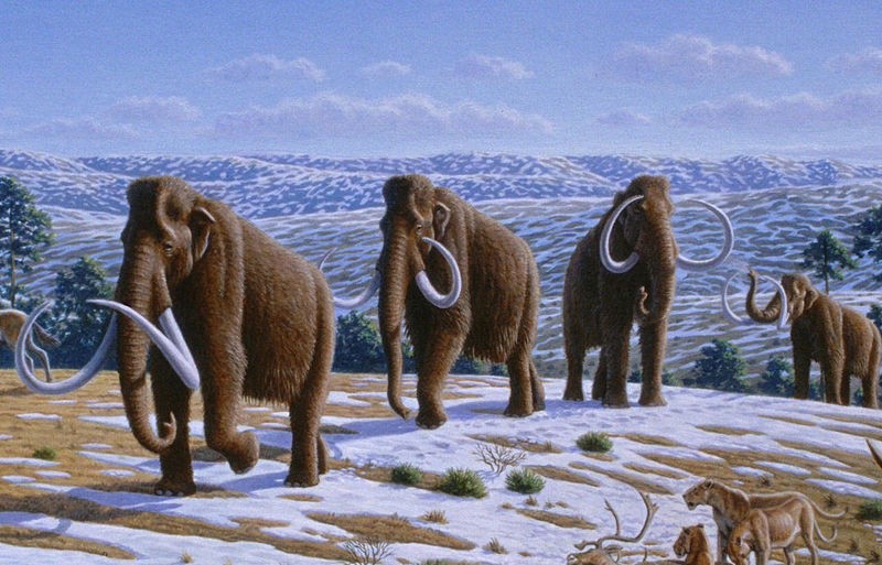 Figure 10: Woolly Mammoth in what is believed to have been the cold-temperature steppe habitat typical of the Arctic regions in Siberia, Alaska and part of Yukon (Beringia) during the last ice age. Image created by  Mauricio Anton, Creative Commons license .