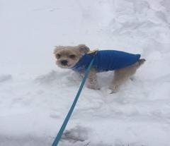 Jax enjoying some snow time