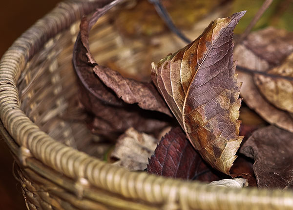 "Basket of dead leaves - size available up to 24""x32"""