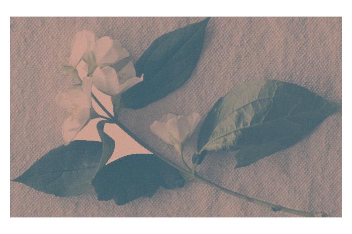 Un Brin Bohème - design floral