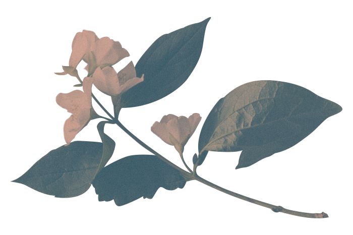 Oaktopia - trees
