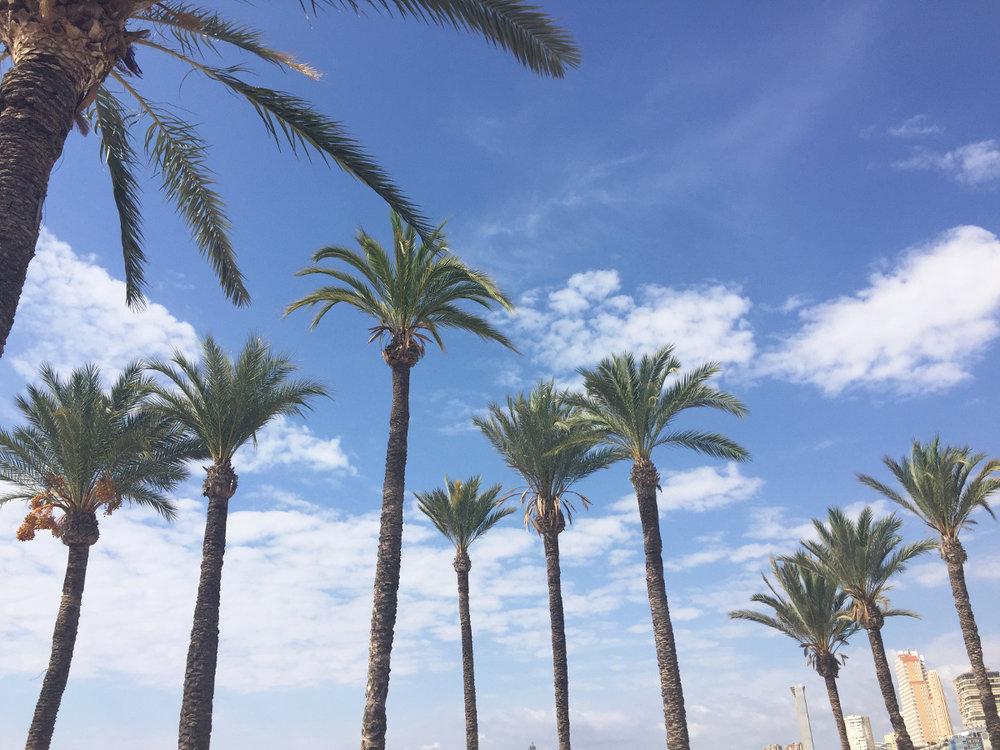 Venus-Beauty-Hair-Tavistock-Devon-Salon-Hair-Stylists-Alicante-Milkshake-No-Inhibitions-Z.one-Concept-Professional-Summer-Party-Benidorm-Palm-Trees.JPG