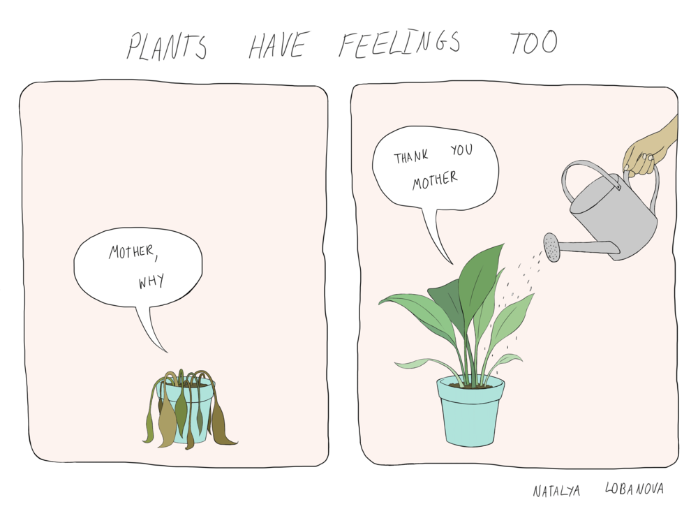 houseplant.png