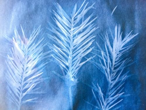 Cyanotype Prints || Rachel Loewens