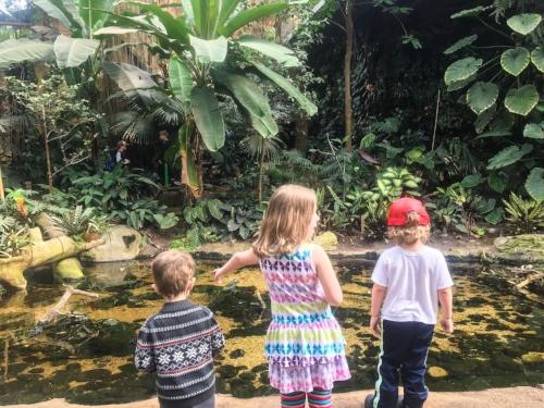Spring break at Henry Doorly Zoo || Rachel Loewens Fine Art