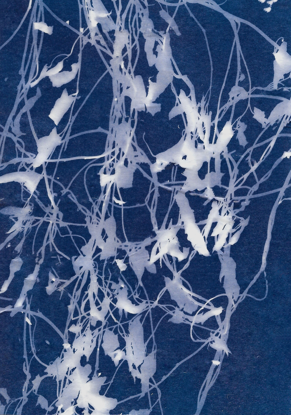 Winter Garden 1 || cyanotype || Rachel Loewens