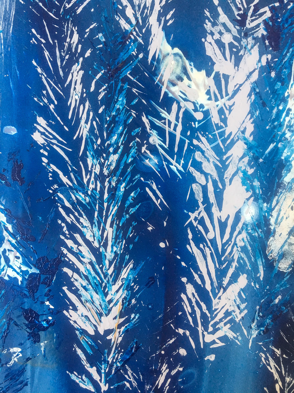 Sunny December Cyanotypes || Rachel Loewens Fine Art
