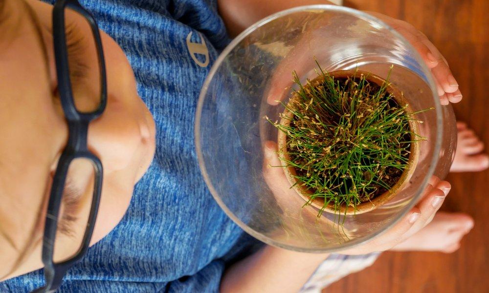 Terrarium plant || houseplant love || Rachel Loewens Studios