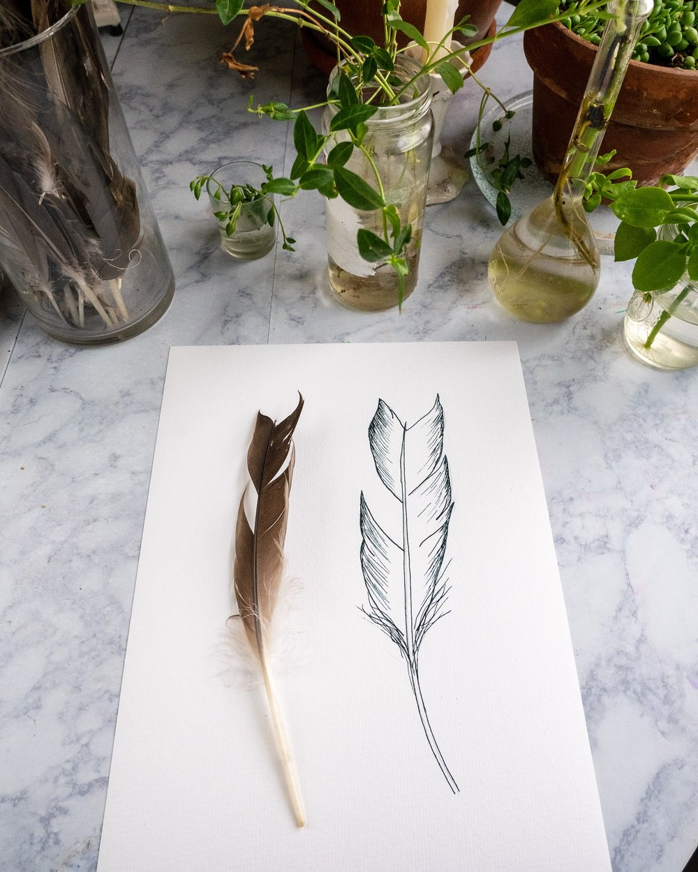 feather sketch || pen and ink || Rachel Loewens Studios