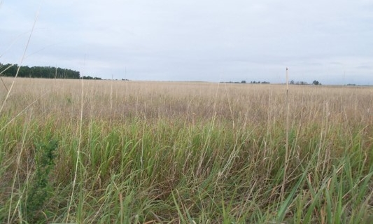 CRP plantings help reduce soil erosion, improve water quality, and enhance wildlife habitat.