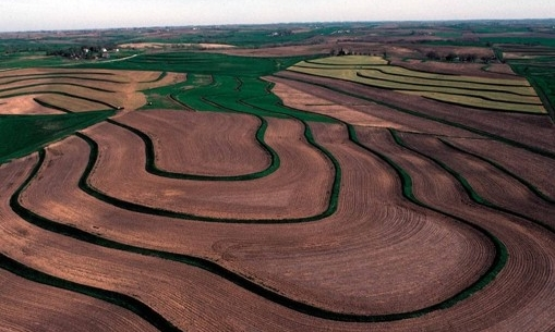 Terraces like this one help prevent nutrient runoff and are a great resource for helping farmers protect water quality.