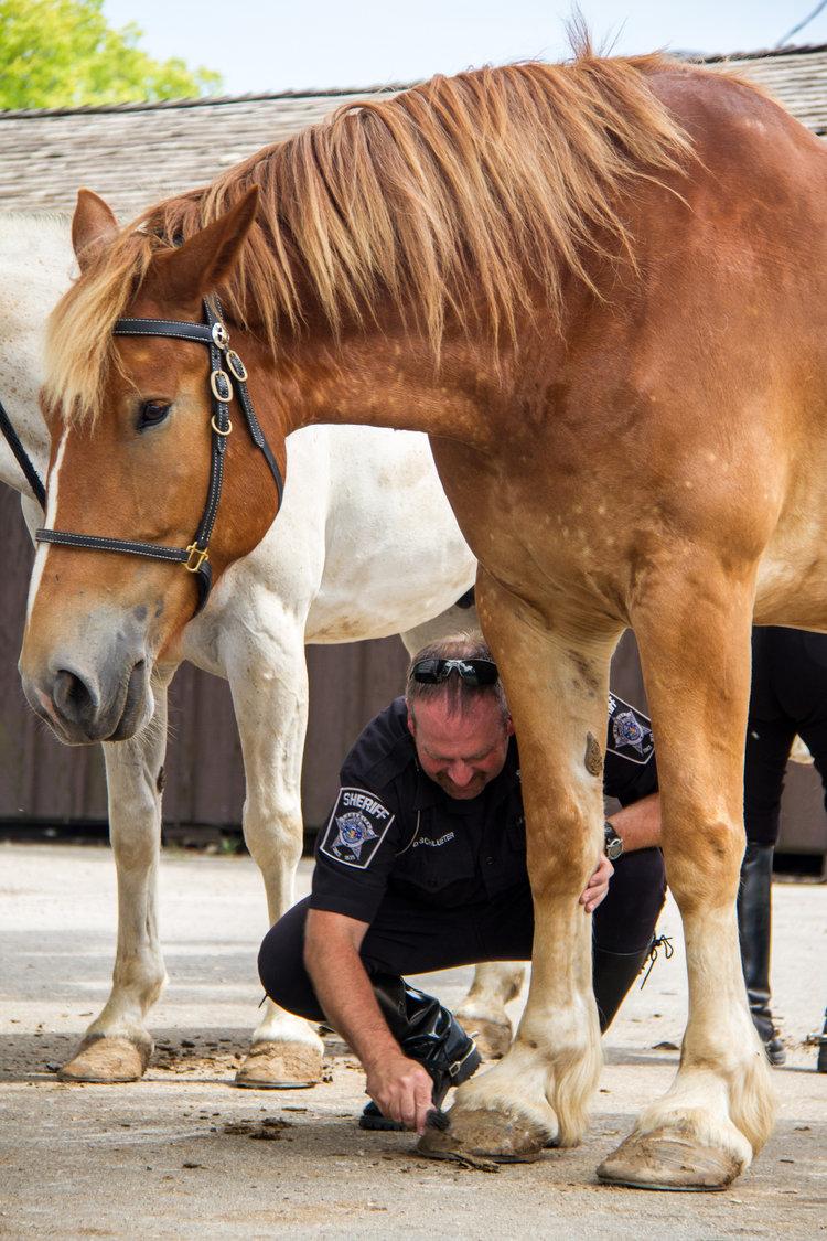 art-mellor-53202-sheriff-horse.jpg