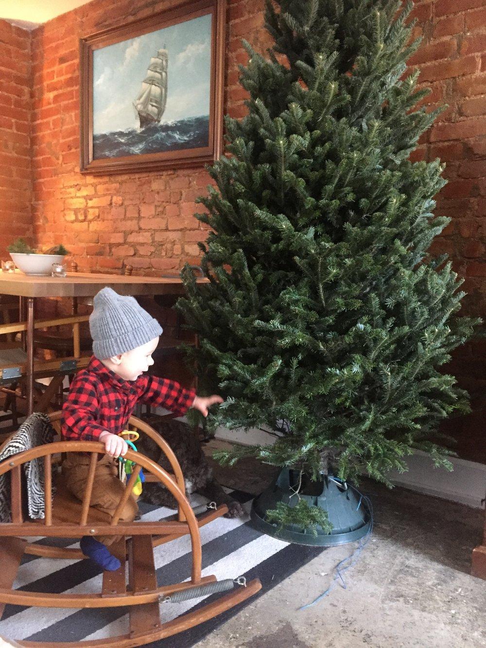 week9christmastree3jpg - Christmas Tree Shopping