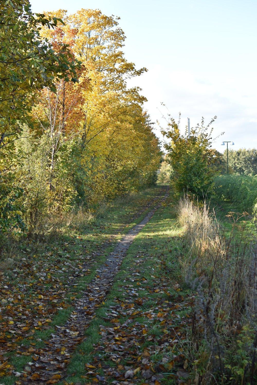 Kan man annat än älska höstens färger?