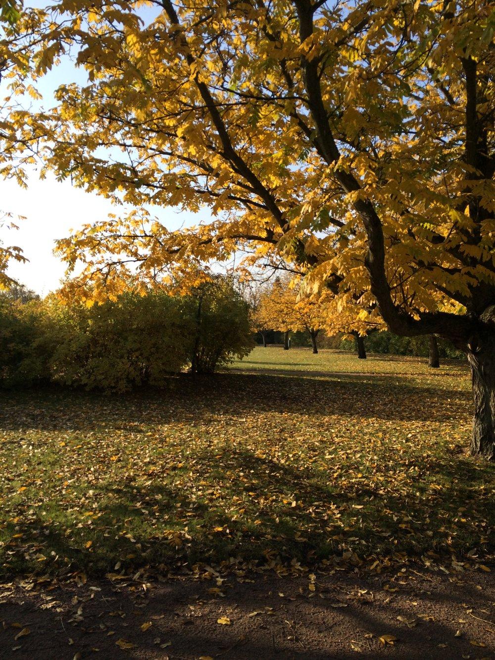 Gult är inte fult men hösten blir aldrig så fin på bild som i verkligheten.