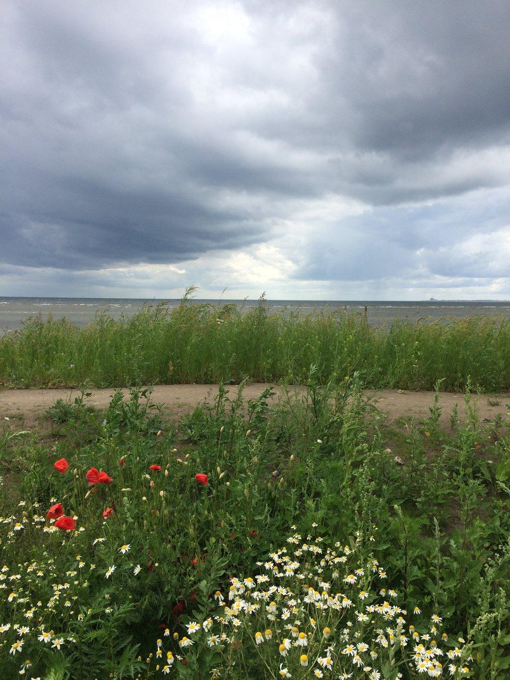 Svensk sommar <3