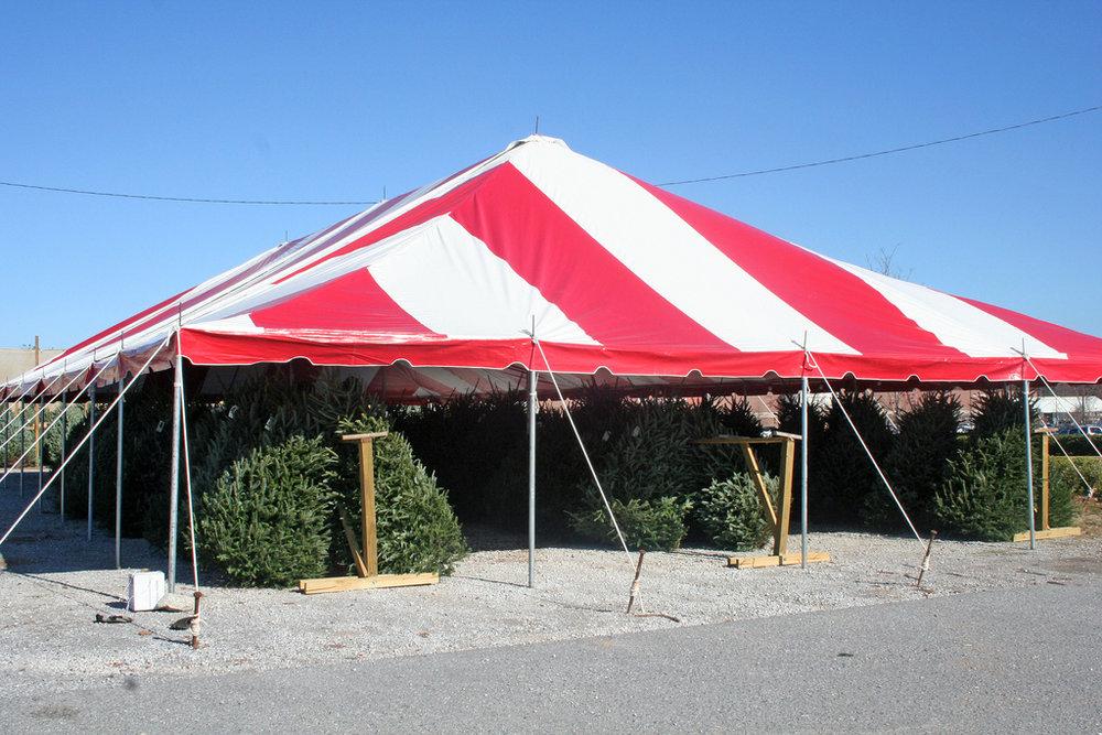 tent_tree.jpg