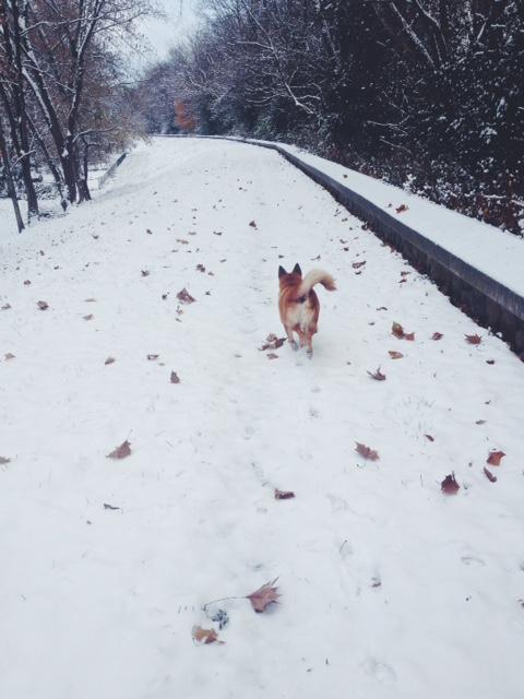 snowy walk, penelope dullaghan