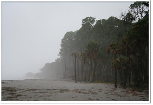 fogbeach.jpg