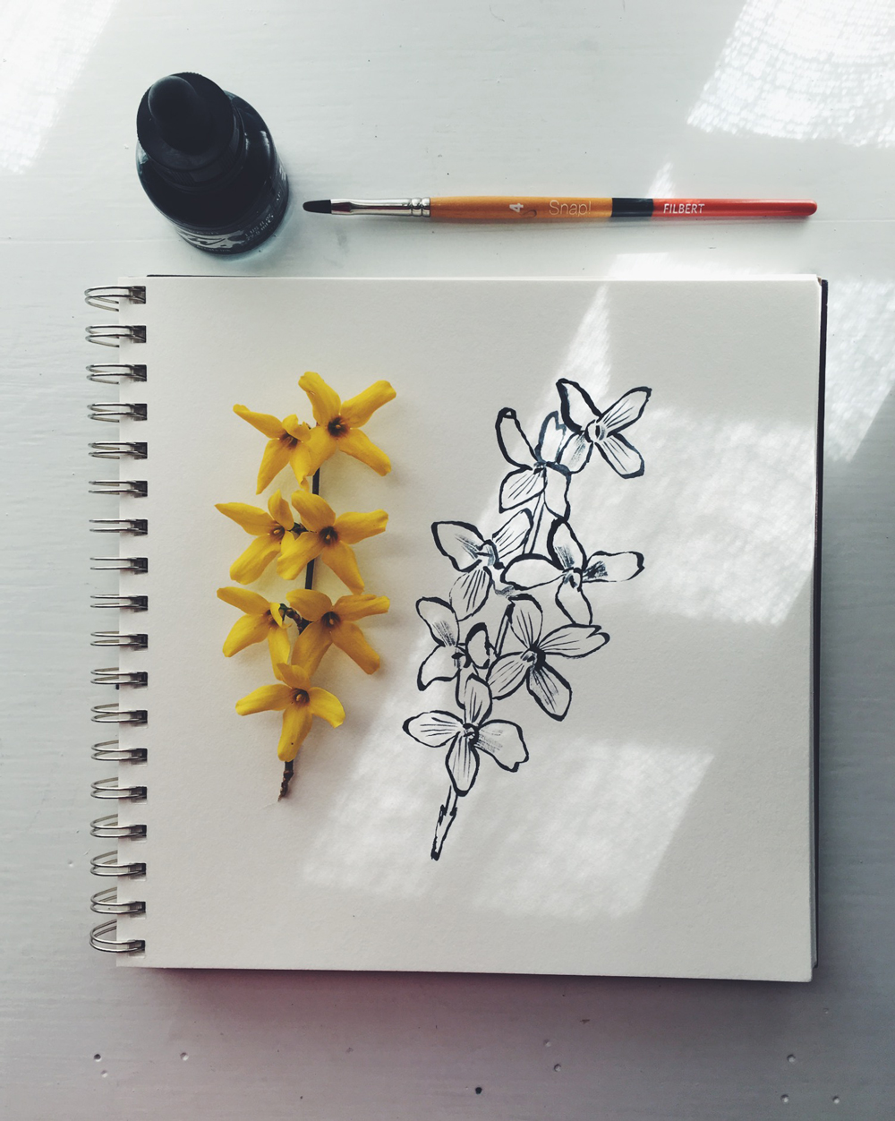forsythia, drawing, penelope dullaghan
