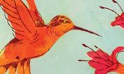 hummingbird_sm.jpg