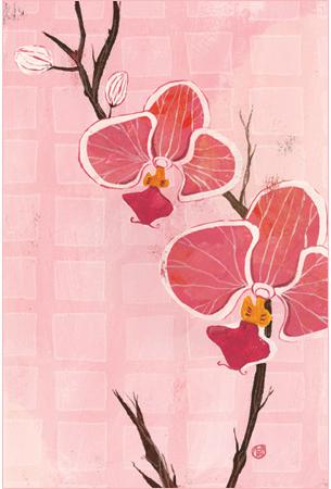 orchidsclio.jpg