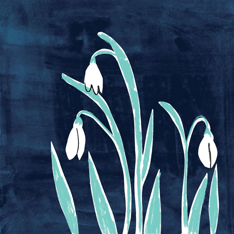 penelope dullaghan : illustration snowbells
