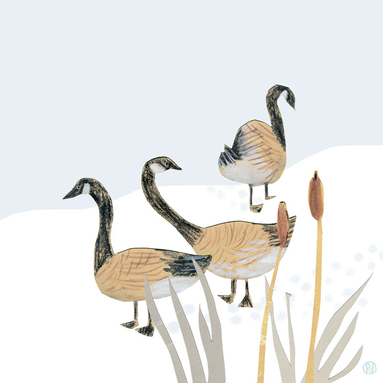 penelope dullaghan - inspired by the river, illustration of geese