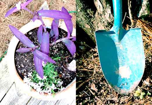 purpleandblue.jpg