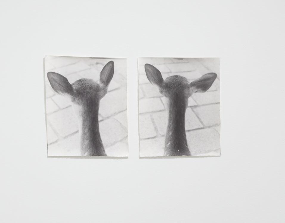 1997-2005, Jochen Lempert, From Symmetry and Architecture.jpg