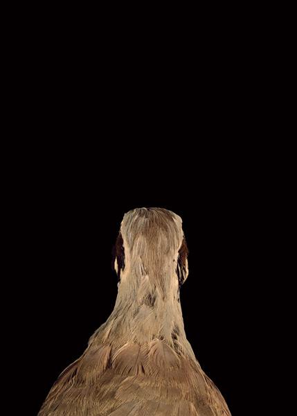 2003, Lynne Roberts Goodwind, Bad Bird 3.jpg