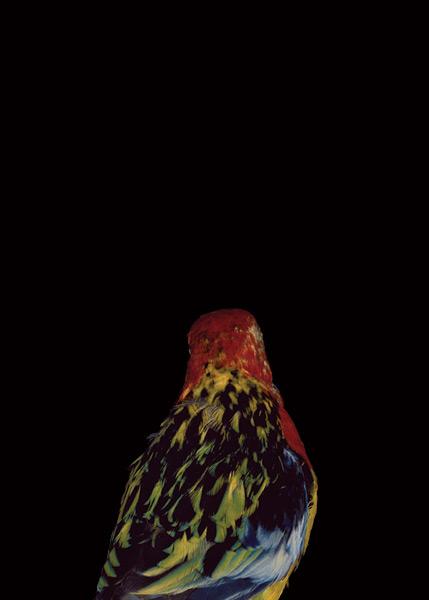 2003, Lynne Roberts Goodwind, Bad Bird.jpg