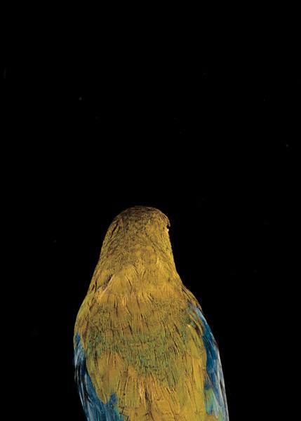 2003, Lynne Roberts Goodwind, Bad Bird2.jpg