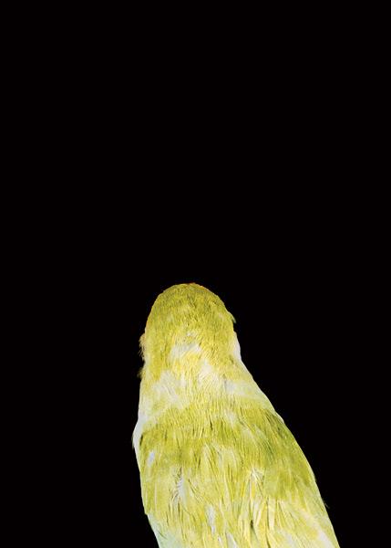 2003, Lynne Roberts Goodwind, Bad Bird4.jpg