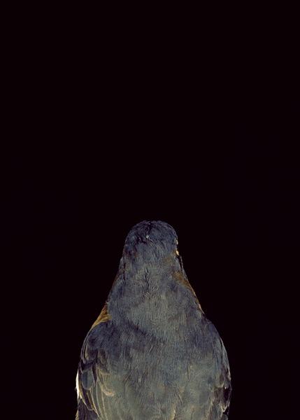 2003, Lynne Roberts Goodwind, Bad Bird6.jpg